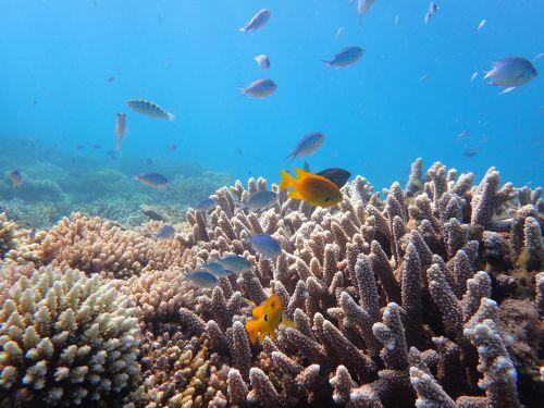 Récifs, lagon de Mayotte (©DEAL976)